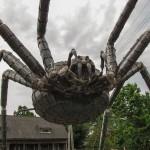 broliu kalve voras (2)