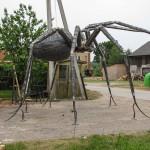 broliu kalve voras (7)